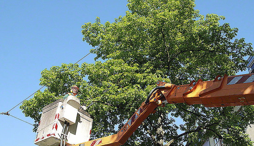 Tree Transplanting – What You Should Know